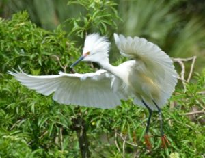 Flying white bird small